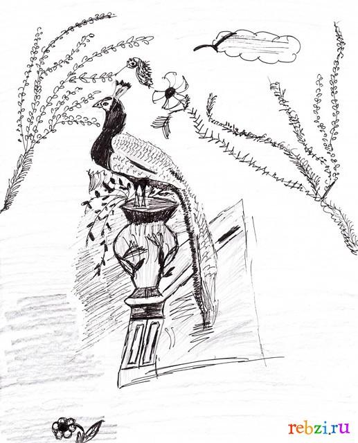 павлин рисунок: