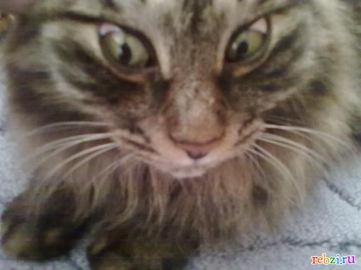 Кот по имени Гав.  Холмск.
